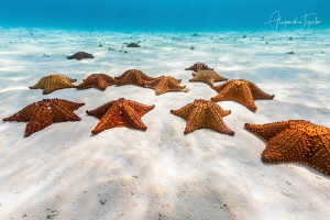 Stars in the Sea, Cozumel Mexico by Alejandro Topete